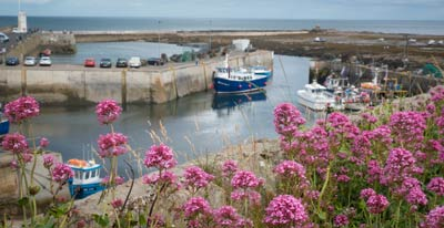 Boats in the Seahouses harbour